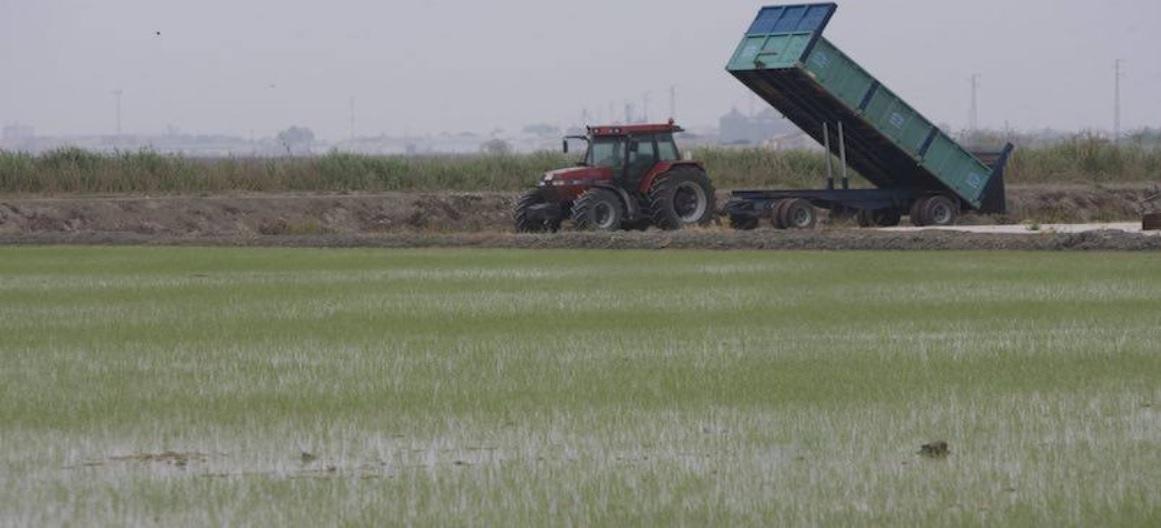 Conoce las últimas novedades fitosanitarias para el arroz