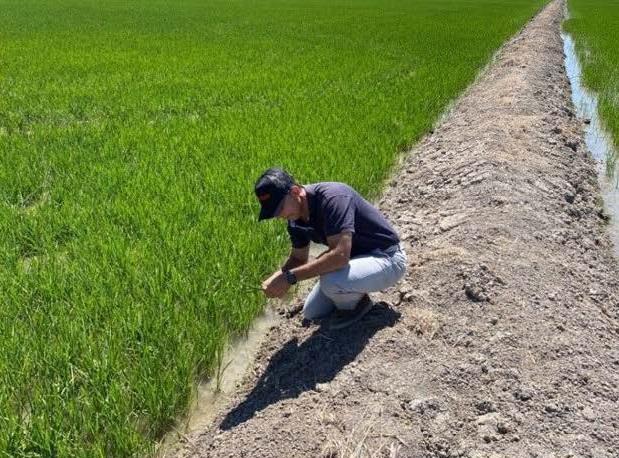 20MINUTOS.ES: Arroceros critican que se señale solo al sector en el Virus del Nilo: «Existen otros cultivos en la zona»