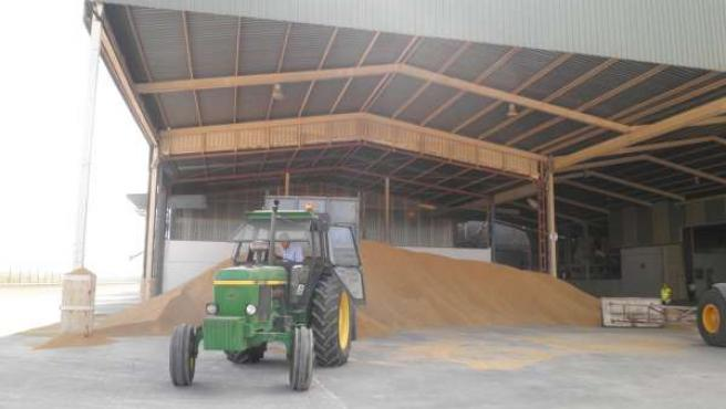 La Pandemia lastra el precio de materias primas, salvo del arroz, trigo y paladio.