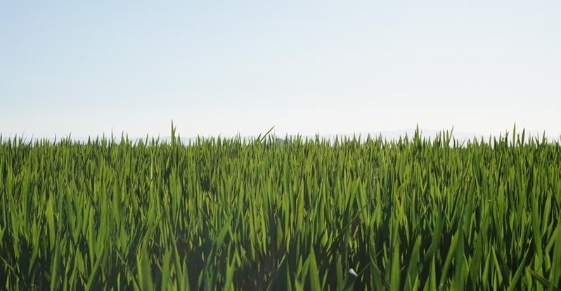 ABC Sevilla-Agronoma- Herogra alimenta la producción sostenible de arroz de Las Marismas