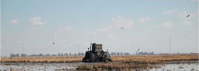 Pérdidas millonarias en el arroz, por segundo año consecutivo