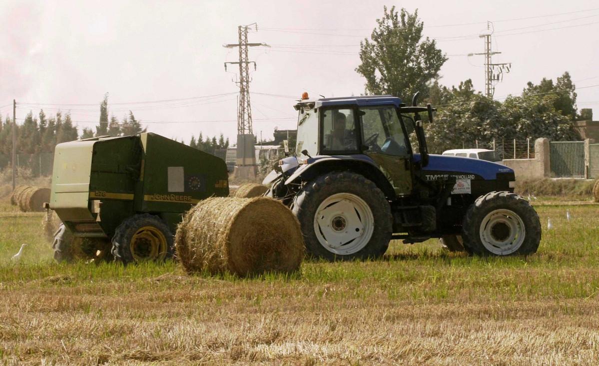 Una empresa usará la paja del arroz para convertirla en envases sostenibles.