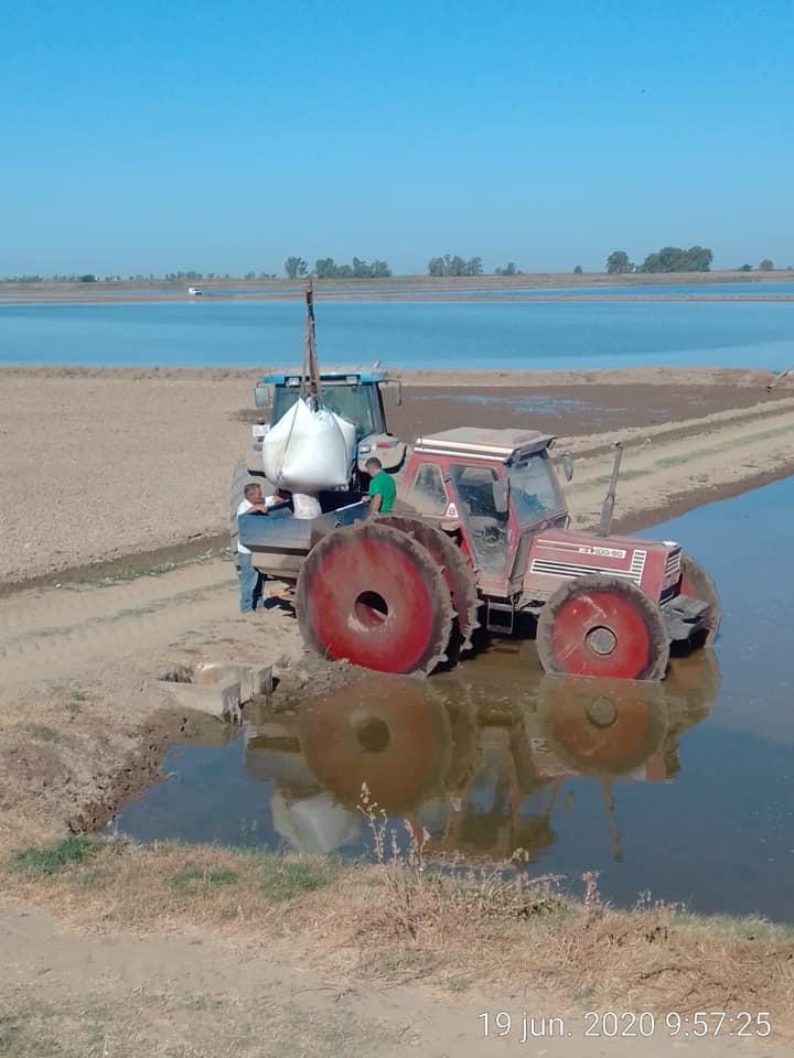 36.000 Has. de arroz sembradas en Sevilla