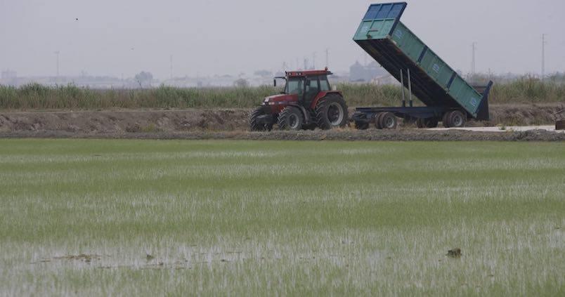 El nuevo Plan Hidrológico otorga más de 200 millones de euros a la modernización del riego del arroz