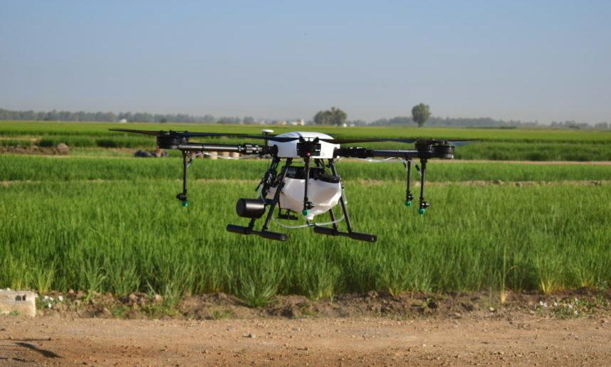 La Junta licitará una fumigación con drones en pantanales y arrozales para atajar el virus del Nilo