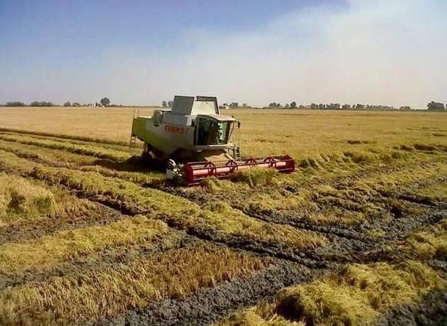 Europapress: La Federación de Arroceros de Sevilla valora la exención del requisito de diversificación de cultivos para el Pago Verde