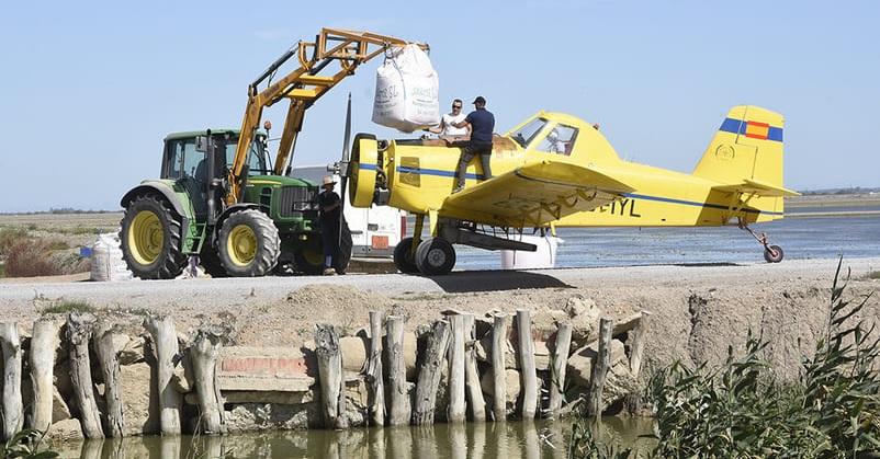 La falta de agua obliga a perder más de la mitad de la superficie del arroz